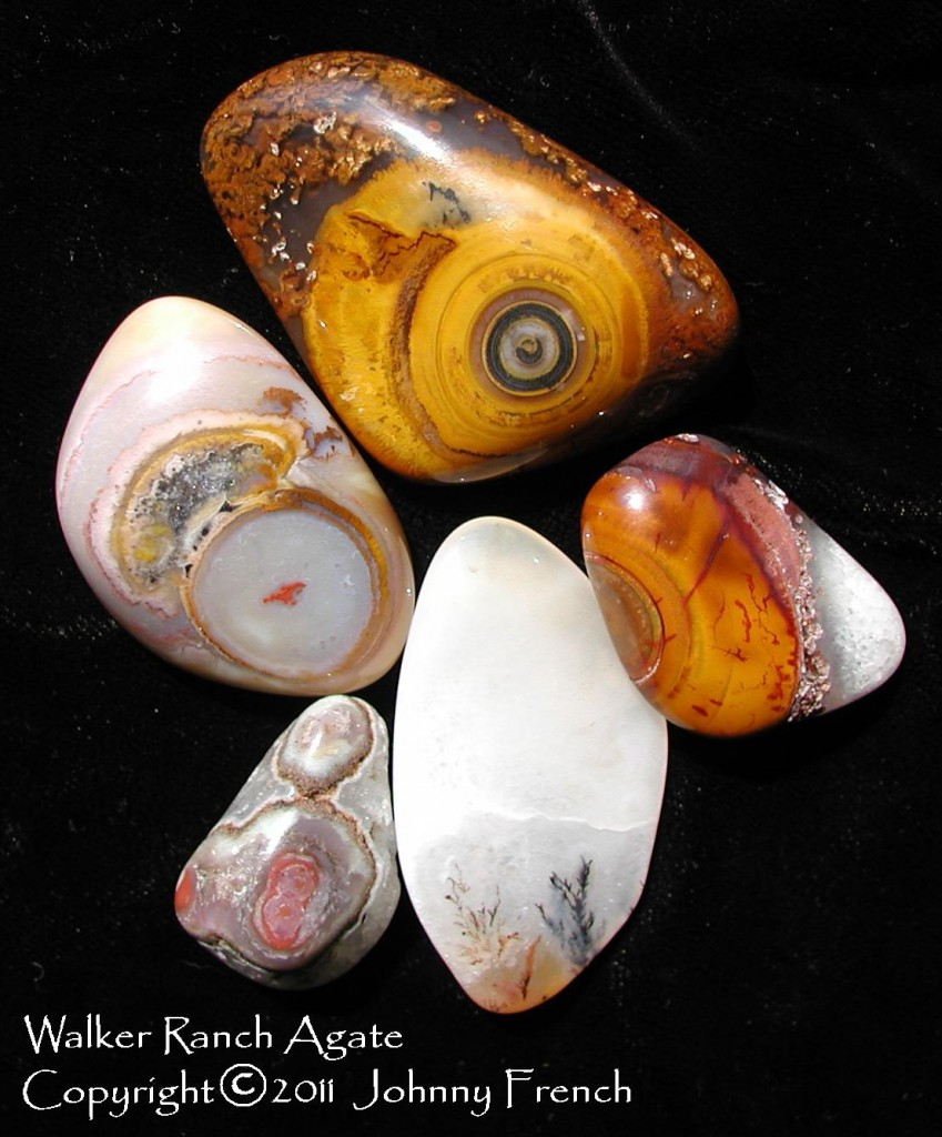 Eye Agate - Walker Ranch