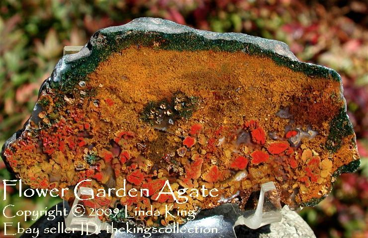 Flower Garden Agate - Walker Ranch