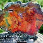 Flower Garden Agate - Walker Ranch