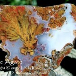 Plume Agate - Walker Ranch