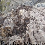 Petrified Tree - East Needle Peak