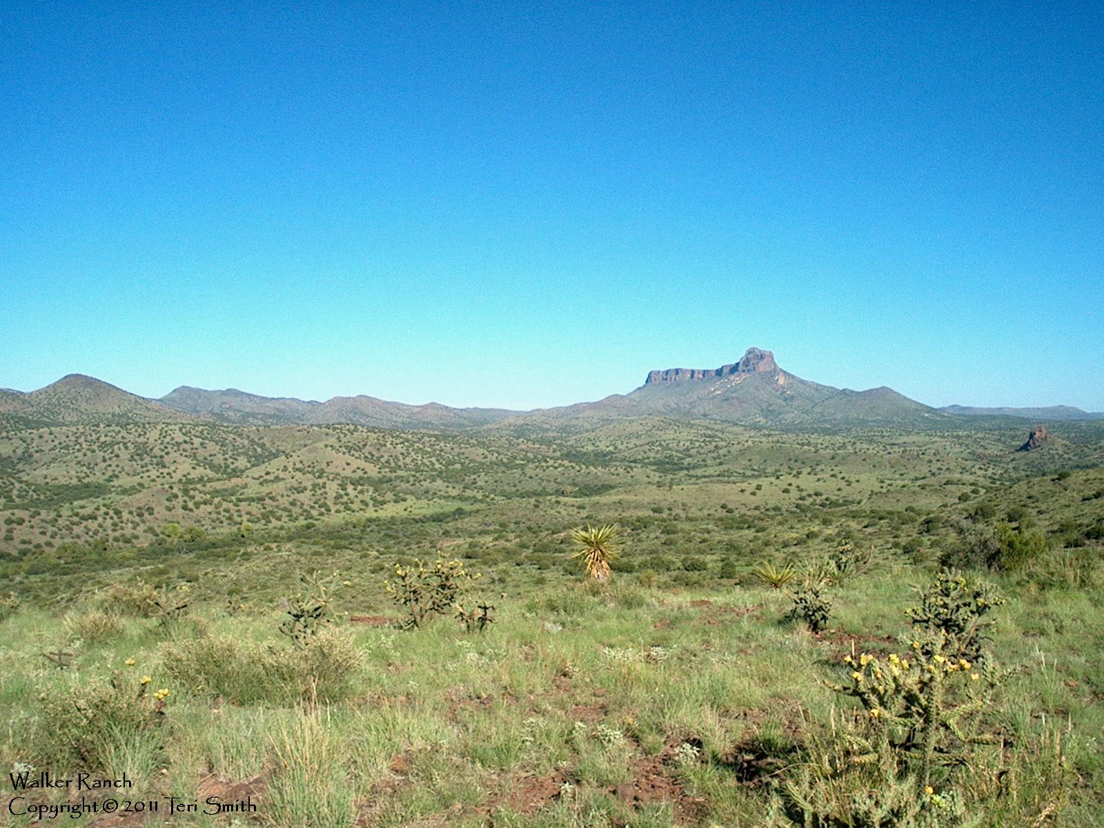 Cathedral Mountain from Walker Ranch