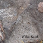 Nodules in Basalt - Walker Ranch